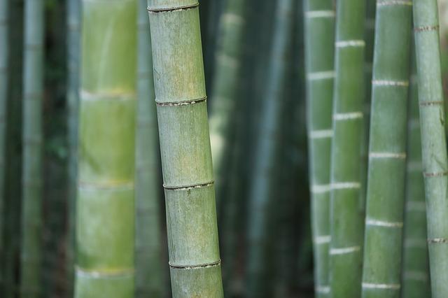 bambusz kerites